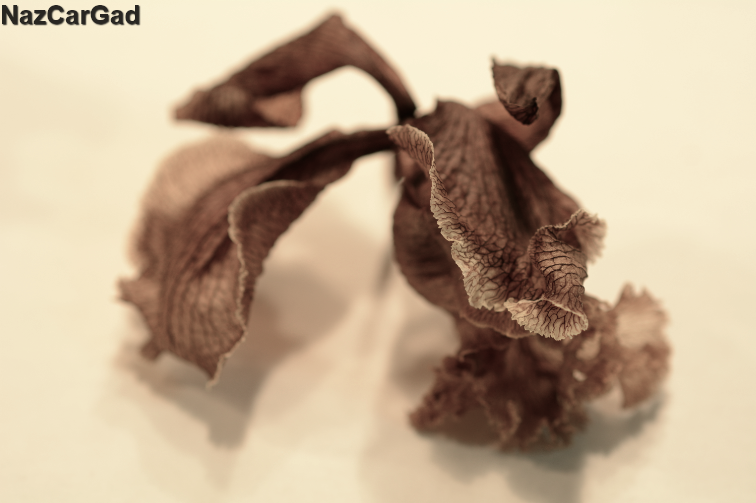 …Withered Petals…
